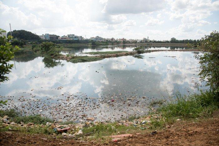 A View of T Dasarahalli Lake, in Bengaluru. (Photo/ B H Shivakumar)
