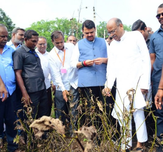 Fadnavis visited farm areas in Mhaispur, Lakhanwada, Kapashi and Chikhalgaon in Akola in the morning and interacted with farmers who had suffered crop damage. Twitter