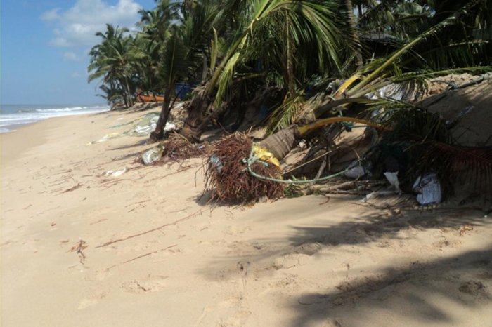 Some of the coconut trees were uprooted while others were washed awaydue to sea erosion at Maravanthe beach.