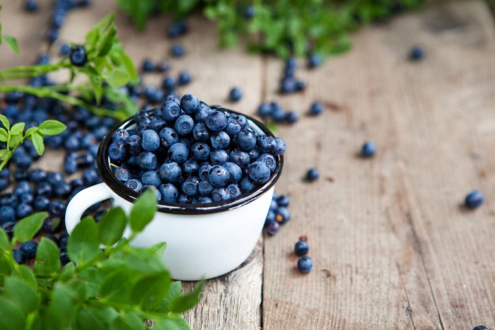 The blueberry is known for its disease-fighting abilities.