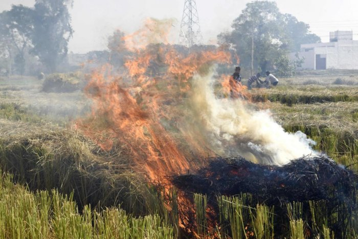 People burn straw stubble after harvesting paddy crops in a field near Attari village, some 35 km from Amritsar on November 5, 2019. AFP Photo