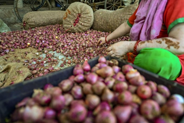 To speed up onion imports, Agriculture Ministry eased the phytosanitary rules that levied four-time the inspection fees. (PTI Photo)