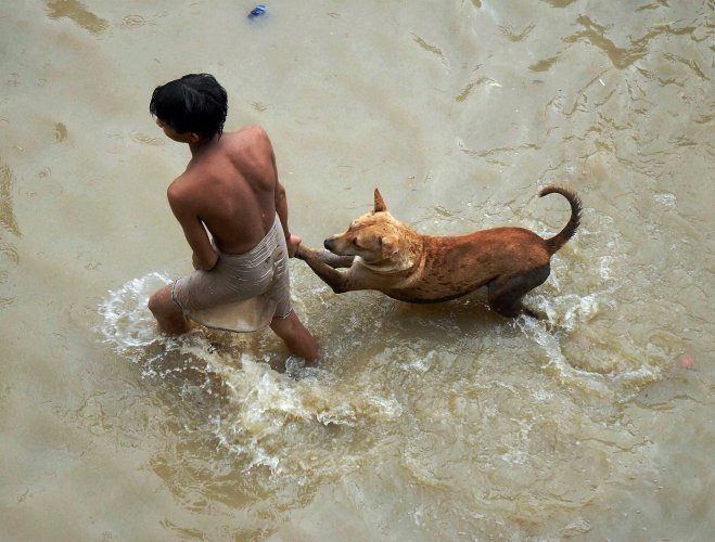 Dogs from flood-hit Chennai find safe home in Bangalore hotel
