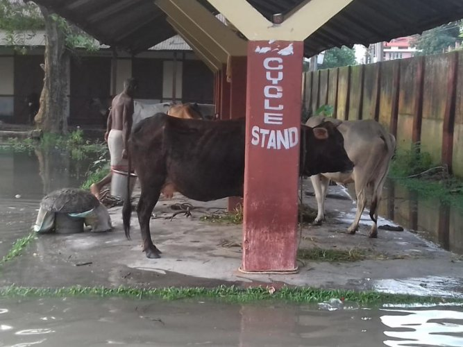 Flood-hit areas in Dhubri district in western Assam on Tuesday. Photo credit: Raju Kumar Narzary.