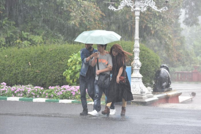 People use umbrella to protect from rain at Lalbagh in Bengaluru on Thursday. Photo by S K Dinesh