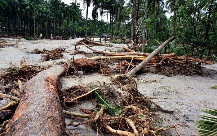 Hundreds of arecanut trees were washed away in the flash flood at Pharlani, Belthangady taluk.