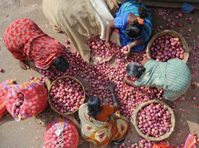Onions at Yeshwanthpur APMC Yard in Bengaluru on Wednesday.   DH Photo: Pushkar V