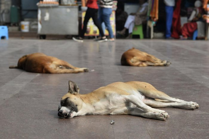 How rabies virus blocks out immune response decoded' | Deccan Herald