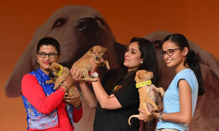 Animal lovers use adoption drive platforms to spread awareness about indie dogs.DH Photo by S K Dinesh