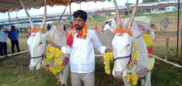 Pradeep Kumar, a farmer from Arkalgud, exhibits his pair of bullocks during the cattle fair in Kushalnagar.