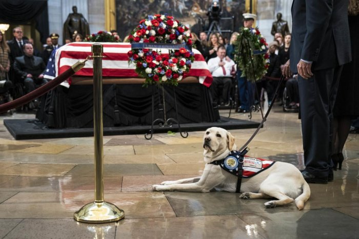 Sully, a yellow Labrador service dog for former President George H. W. Bush, sits near the casket of the late former President George H.W. Bush as he lies in state at the U.S. (AFP Photo)
