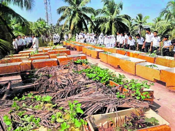 Vegetables are cultivated using discarded refrigerator cases at Sayyed Madani Urdu Higher Primary School and High School, Halekote, Ullal.