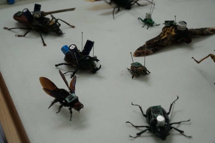 A collection of insects with electrodes and cameras attached is displayed at an insect exhibition at GKVK on 1 December 2019. The setup reflects studies in International Institutes where insects are used to serve as drones for surveillance and rescue work
