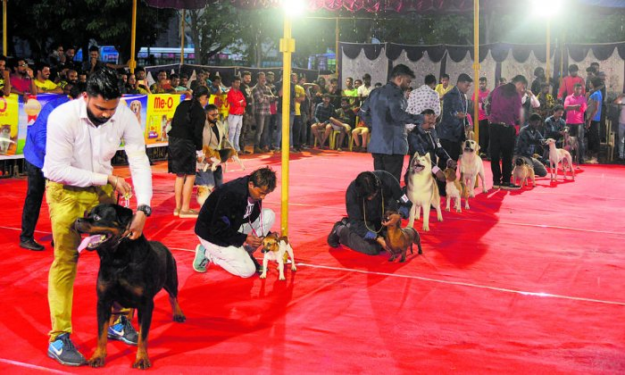 A variety of breeds take part on the last day of the dog show organised by Karavani Canine Club in Mangaluru on Sunday. DH Photo