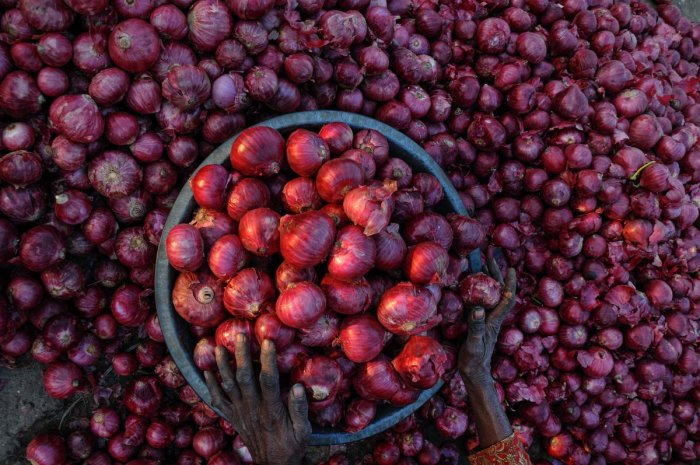 """""""Delhi government is asking for onions but the central government is not giving. The central government has stopped giving onion to the Delhi government,"""" Delhi Deputy Chief Minister Manish Sisodia said accusing the Centre of deliberately creating scarcity on onions. Photo/PTI"""