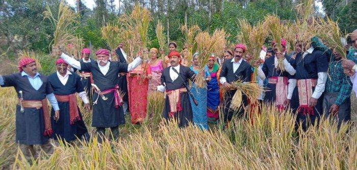 CNC President N U Nachappa and members cut paddy sheaves as a part of Huthari festival, at Chikkabettageri in Kushalnagar.