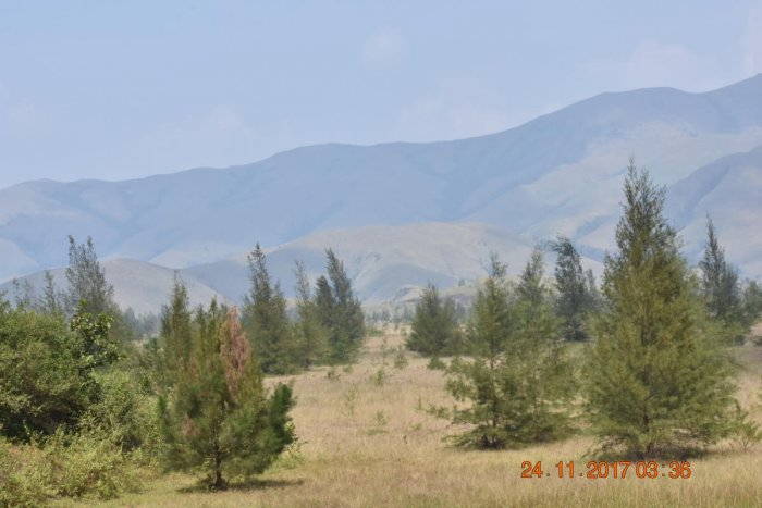 The shola-grassland mosaics of Kudremukh National Park. Photos by author and Chetan Misher