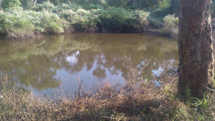 A pond brimming with water inside Nagarahole Rajiv Gandhi National Park.