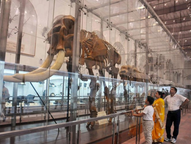 Citing an example, the researchers said, the most large-bodied mammals in South America went extinct when humans first appeared on the continent about 12,000 years ago. Representative image/PTI