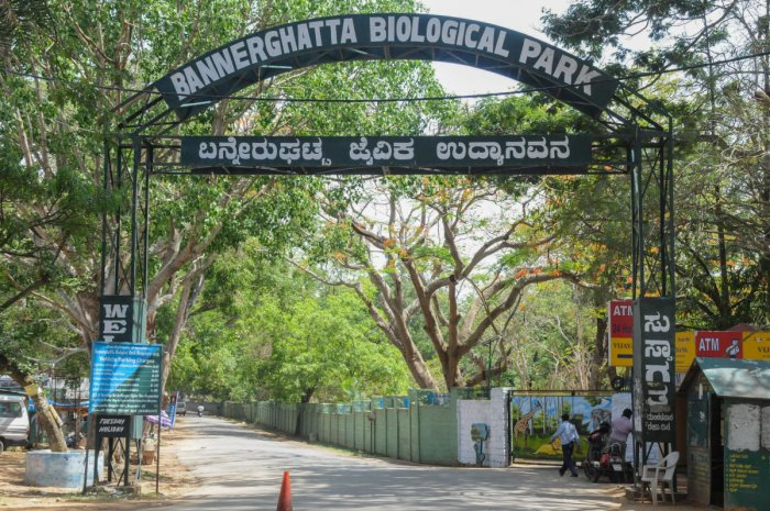Visitors can now reserve various services at the Bannerghatta Biological Park through online booking. DH file photo