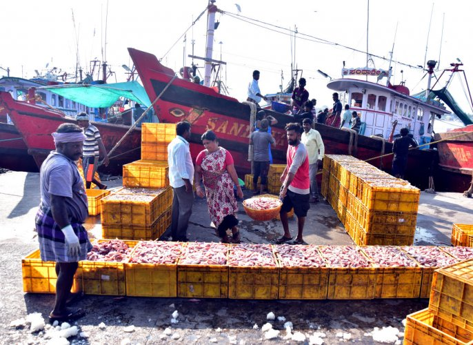 With the chief minister announcing a relaxation of curfew on Sunday morning, hundreds of fishermen began to unload their catch in Bunder, Mangaluru, on Saturday.