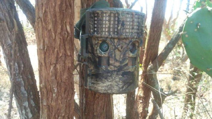 A camera trap fixed on a tree at Bandipur, Chamarajanagar district.