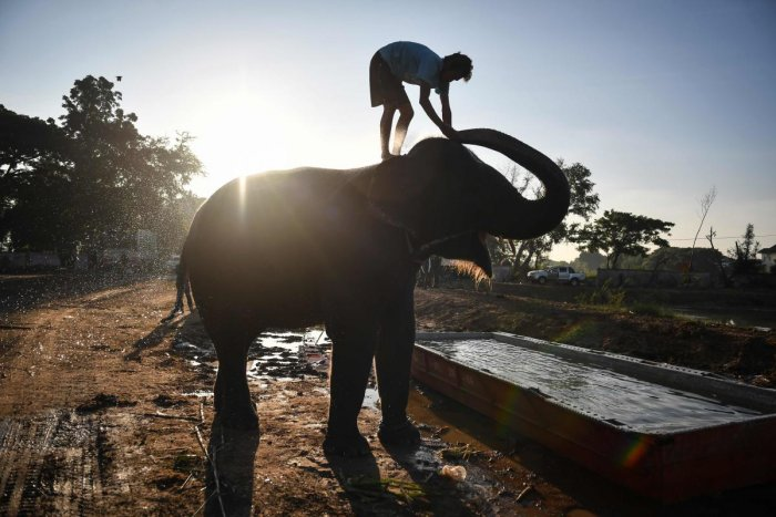 This photo taken on November 17, 2019 shows an elephant having a bath before the arrival of tourists. (AFP file photo)