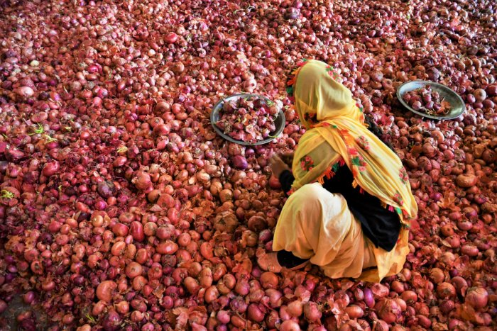 A woman labourer sorts onions at the Sabzi Mandi, in Chandigarh. (PTI Photo)