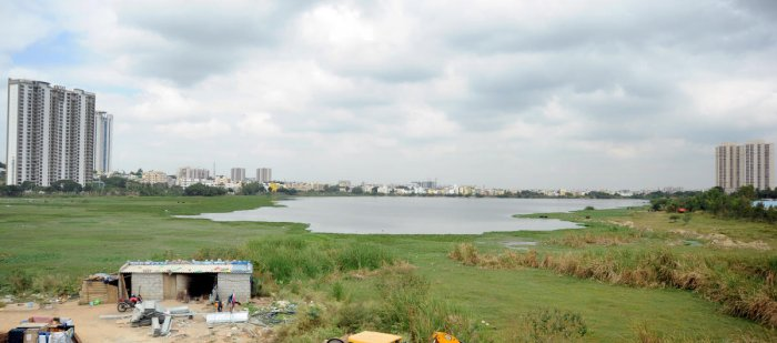 The number of lakes in Bengaluru has fallen from 262 in 1960 to 81 today. What is more, many lakes have shrunk or become stagnant sewers.