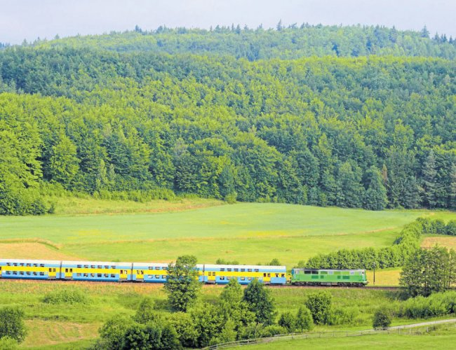 The Central Railway had done the highest ever tree plantation on railway land and across the rail tracks in association with Forest Department of Maharashtra state government. DH file photo for representation only