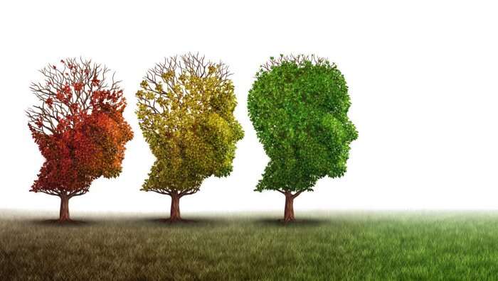 Some patients with this form of dementia have a specific genetic mutation which prevents their brain's cells from making a protein called progranulin. Two antibiotics were both effective in fixing the mutation, and making the functional progranulin protei