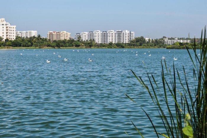 A view of the Jakkur Lake. (Credit: DH)