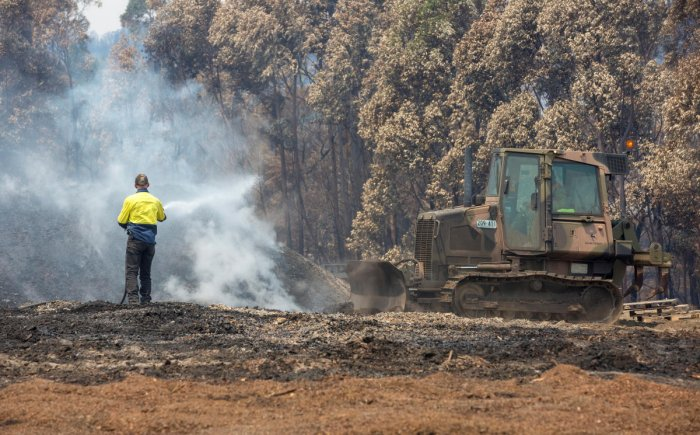 Over 1.25 billion animals are believed to be dead in the wake of bushfires with Koalas being one of the worst-hit animal species. (Reuters Photo)