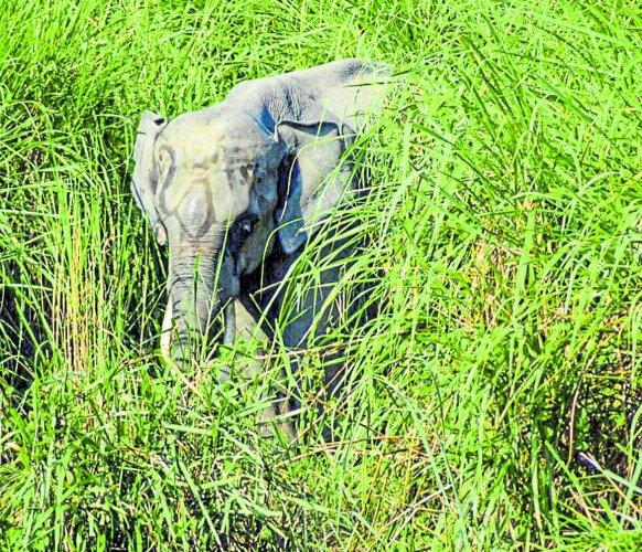 A jumbo in the bush. (Photo by J R Sachin Kumar)