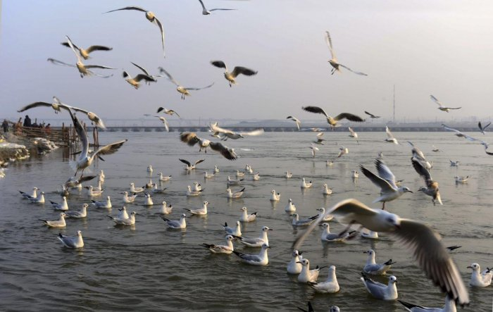 Along the route, they will map the river on pollution levels and submit a final report to Prime Minister's office and the Union ministry concerned once the Parikrama ends.