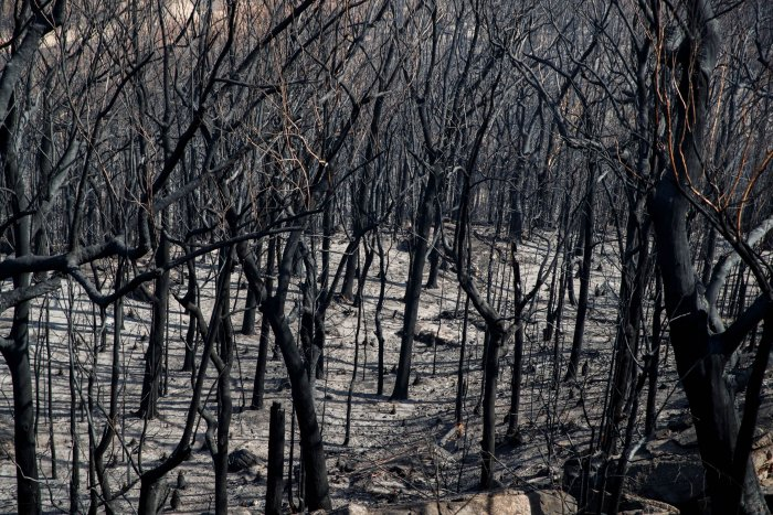 In Queensland state, which also received heavy rainfalls, just one fire remains ablaze, while nine fires are alight in South Australia south. (Credit: Reuters Photo)