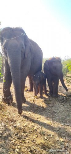 Bannerghatta Biological Park witnessed the birth of a new elephant calf a week ago and officials on Monday named it after Padmashri Tulasi Gowda.