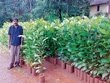This man develops over 50,000 plants every year