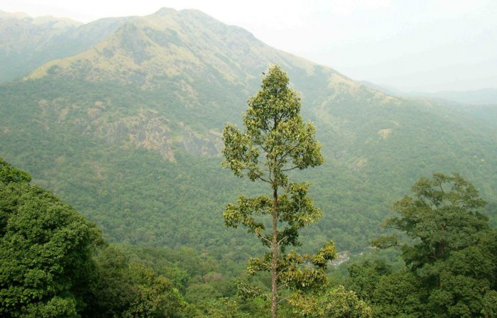 A view of Western Ghats.
