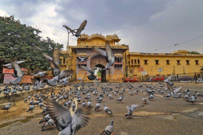 Pigeons seen at the deserted Jalebi Chowk during the lockdown imposed in the wake of the novel coronavirus pandemic, in Jaipur, Rajasthan.
