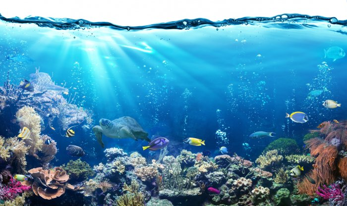 The Great Barrier Reef. (Credit: iStock)