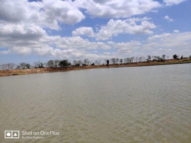 The restored Peravurani lake. NIMAL RAGHAVAN/FACEBOOK