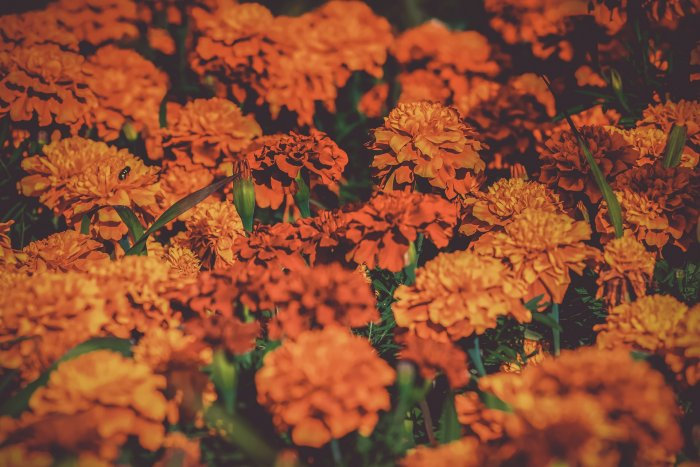 Over the past few years, KIA has witnessed a huge growth in flower exports due to the availability of a CoolPort, equipped with temperature monitoring and cold rooms, with varying temperatures to handle commodities with different requirements. Representative image/Pixabay