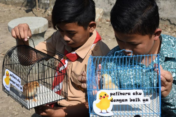 Indonesian pupils look at chicks in cage. (Photo by AFP)