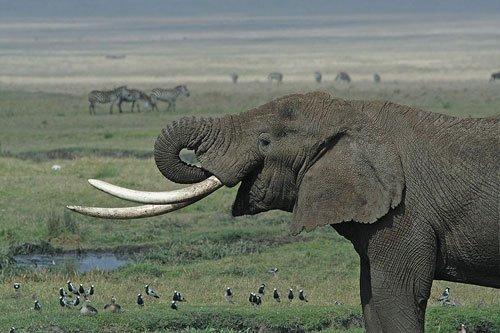 Kerala wildlife chief seeks to destroy 8,000 kg ivory