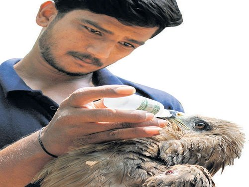 Saviours of urban wildlife