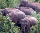 Relief hiked for human victims of wildlife