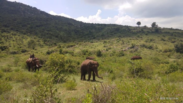 Bandipur forest reserve (DH Photo)