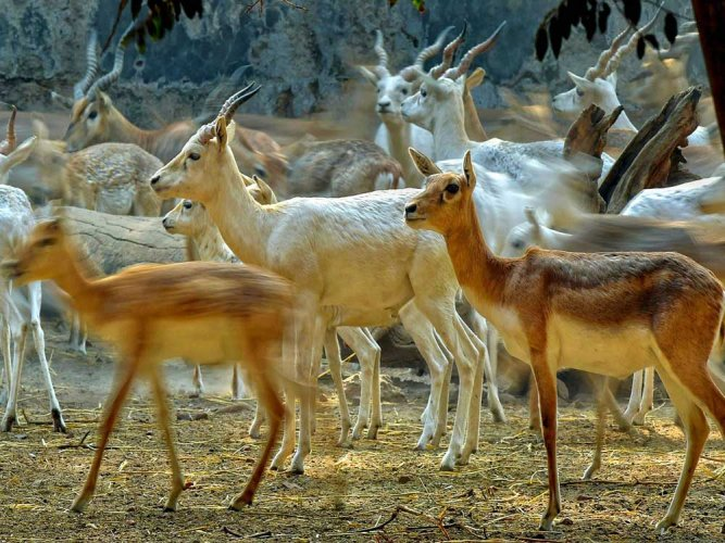 Under the MoU, a study will be conducted on wildlife habitats affected by the project's Nagpur Mumbai Super Communication Expressway and steps will be initiated to protect them. (PTI File Photo. For representation purpose)
