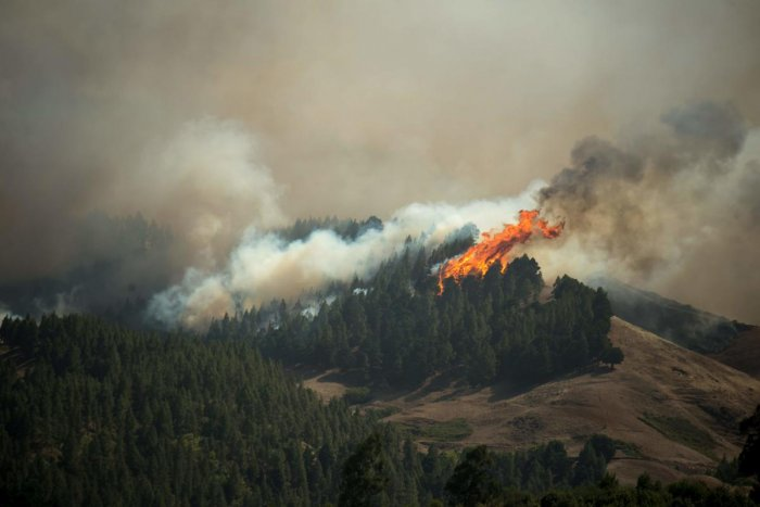 Flames rise from a forest fire raging in Montana Alta on the island of Gran Canaria on August 18, 2019. Authorities on the Spanish island of Gran Canaria evacuated residents as a forest fire broke out just days after another blaze raged in the same area. AFP